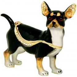 Chihuahua Tricolour...